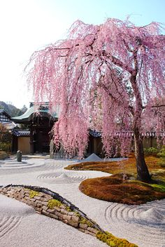 Sakura, Kodai-ji, Kyoto, Japan - I'll take a garden like this.