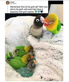 Things that make you go AWW! Like puppies, bunnies, babies, and so on. A place for really cute pictures and videos! Cute Animal Memes, Cute Funny Animals, Funny Cute, Cute Cats, Hilarious, Funny Birds, Cute Birds, Amazing Animals, Animals Beautiful