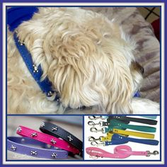 Thanks again - Rocky looks adorable.  http://www.kippyandco.com/products/leather-bone-dog-collar