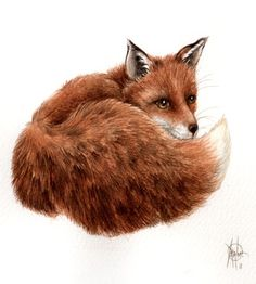 Original 9x7 Watercolour Red Fox 4.. . NOT by happyapplebumblebee