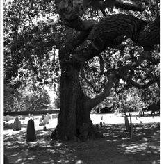 Old Burial Ground  Cemetery Salem, Mass.