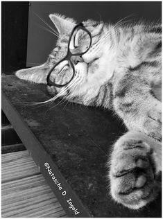 #bestcat #catphoto #happycat #catlove #funnycats #catlovers #catworld #cat #catphotography #katze #blackandwhitephotography #stubentiger Cartoon Design, Modern Man, Tigers, Lions, Big, Cats, House, Lion, Gatos
