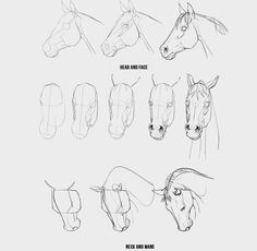 AnatoRef Art Drawings Sketches Simple, Animal Sketches, Horse Drawings, Animal Drawings, Horse Drawing Tutorial, Horse Sketch, Horse Anatomy, Horse Sculpture, Art Reference Poses
