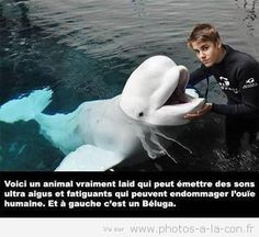 Haha Justin Bieber and a dolphin Really Funny, Funny Cute, The Funny, Hilarious, Funny Shit, Funny Memes, Funny Stuff, Funny Things, Random Stuff