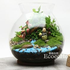 Ecoecho苔藓微景观苔藓瓶生态瓶苔藓盆栽苔藓小品我看见
