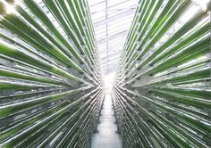 algae (Spirulina) bioreactor tubes in Germany - Spiralps production site www.spiralps.ch #Spirulina #Spiruline