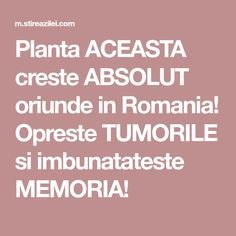 Planta ACEASTA creste ABSOLUT oriunde in Romania! Opreste TUMORILE si imbunatateste MEMORIA! How To Get Rid, Alter, Good To Know, Diy And Crafts, Health Fitness, Healthy, Hair, Medicine, Plant
