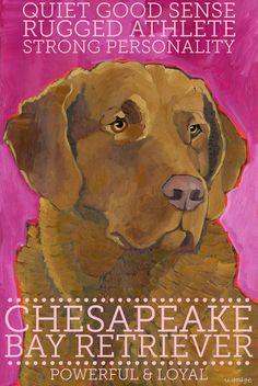 Chesapeake Bay Retriever No. 1 Art Print 8.5x11 by ursuladodge, $25.00