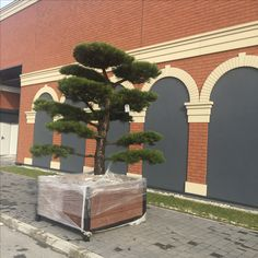 Bonsai Park, Garden Center, ogród, targi, expo warsaw, tree, japanese, Warsaw, Bonsai, Sidewalk, Japanese, Park, Garden, Plants, Garten, Japanese Language