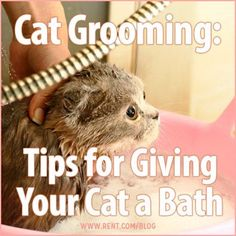 Bathing your cat can be a tough process–nothing seems to bring out the claws quicker than the sound of running water. In order to keep this event as safe as possible for you and your cat, keep the following tips in mind.  #cats #grooming: