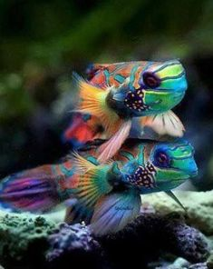 937 Best Tropical Fish Images Exotic Fish Water Animals Marine Fish