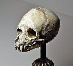 Werewolf Skull(prop) very cool