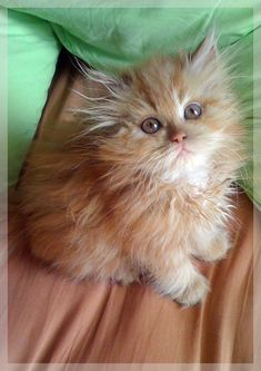 OMG! This kitten is over the top cute don't you think?