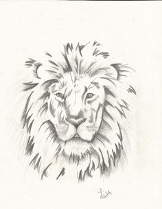 Lion head drawing in charcoal by LisaM.