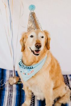 senior dog wearing silver birthday hat, birthday dog, dog party ideas, pet photography | ©Ali Tso Photography, Phoenix pet portraits Dog Birthday Gift, Puppy Birthday Parties, Birthday Ideas, American Alsatian, Old Golden Retriever, The Perfect Dog, Dog Wear, Cute Animal Pictures, Dog Mom