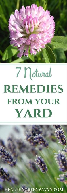 Holistic Remedies 7 plant remedies from your yard: Many of the plants in your your yard have some impressive medicinal uses worth exploring! Holistic Remedies, Natural Home Remedies, Herbal Remedies, Health Remedies, Healing Herbs, Medicinal Plants, Natural Healing, Herbal Medicine, Natural Medicine