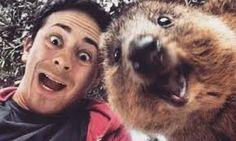 Image result for quokka selfie Quokka, Happy Animals, Bear, Selfies, Cute, Happiness, Australia, Image, Photos