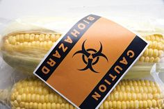 Genetically Modified Foods Cause Tumors, Says French Study.  Specifically Monsanto's Roundup-resistant corn.
