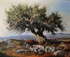 olive tree - Israel national tree