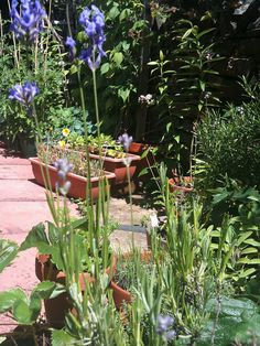 If you want some quick and easy ways to make your garden look great for summer here are some very do-able ideas. http://www.wood-finishes-direct.com/blog/13-quick-and-easy-ways-to-spruce-up-your-garden/