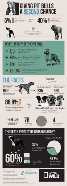 Giving Pit Bulls a Second Chance [Infographic] those dogs are no worse than any other! #pitbulls #BSL #infographics #dogs