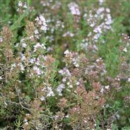 THYM D´HIVER AB Nutrition, Grasses