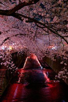 池尻大橋で下車、目黒川沿いに歩く。