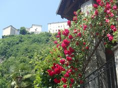Sacro Monte Varallo UNESCO rose rosse roseto fiorito #sacrimontisocial