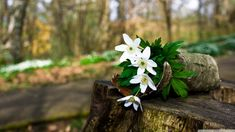 Desktop-HD-Flower-Wallpaper-spring_forest_flowers-wallpaper-1366x768.jpg (1366×768)
