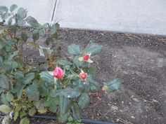 PT 330 OCT 13 FLOWERS IN NAMPA IDAHO SEVENTH DAY ADVENTIST CHURCH