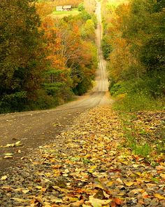 Halbert Hill Road 2 (upstate NY) by Alice Wilkman