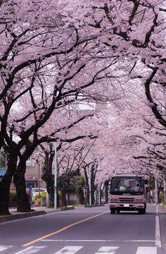 Japan by onori Aesthetic Japan, Japanese Aesthetic, City Aesthetic, Travel Aesthetic, Nature Aesthetic, Aesthetic Backgrounds, Aesthetic Wallpapers, Japanese Nature, Anime Scenery