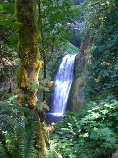 Multnomah Falls, Portland, Oregan: i was there yesterday.  hiked up to the top and my bum is sore today :)