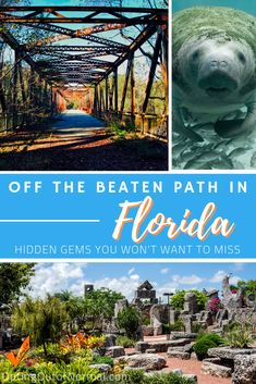 Our ultimate list of the best things to do in Florida away from the crowds. If you're taking a road trip or vacation to Florida, we'll show you more than just Orlando and the Keys. The beaches are popular, but we'll show you some hidden gems you won't believe you're still in Florida. Put some new destinations on your travel bucket list! PLUS we have some amazing RV boondocking / dry camping tips for you. #florida #hiddengems #traveltips #travel #rvlife #boondocking #drycamping