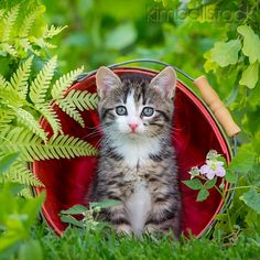 Cute Puppies And Kittens, Kittens Cutest, Cats And Kittens, Cute Cats, Animals And Pets, Baby Animals, Cute Animals, Grey And White Cat, Beautiful Kittens