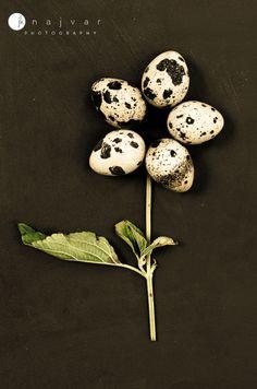 Food Photography by Jennifer Najvar | Quail Eggs