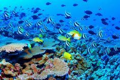 The Great Barrier Reef, in the Coral Sea off the coast of Queensland, Australia is the worlds largest coral reef system. Its so large, you can see it from outer space. The reef is a very popular destination for scuba divers and other tourists.