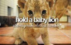 Bucket list - hold a baby lion Best Friend Bucket List, Bucket List Life, Adventure Bucket List, Life List, Bucket List Tumblr, Bucket List For Teens, Bucket List Before I Die, Holding Baby, Summer Bucket