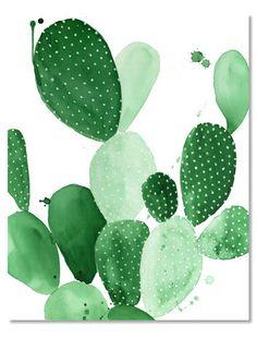 morfologia cactus - Buscar con Google