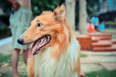 A desparasitação externa é um dos cuidados mais importantes com a saúde do animal. É importante saber como aplicar os produtos corretamente.