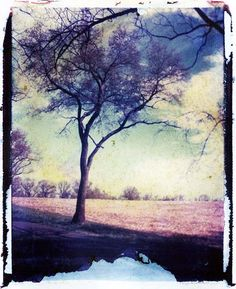 Polaroid Transfer by Angela Petsis