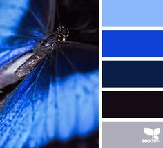 { winged blue }