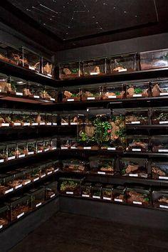 viper gecko setup - Yahoo Image Search Results