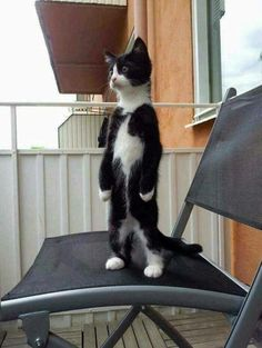 Look I can stand walking like you. Do you want hang out with me for today? Tap the link Now -  Luxury Cat Gear - Treat Yourself and Your CAT!  Stand Out in a Crowded World!