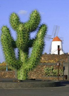 """Huge steel cactus by Cesar Manrique sits at the entrance to the """"Jardin de Cactus"""" on the island of Lanzarote. Belle Villa, Land Of Enchantment, Spain And Portugal, Canario, Island Beach, Canary Islands, Strand, Outdoor Gardens, Beautiful Places"""