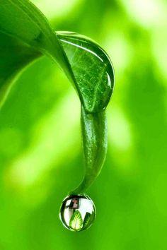 Droplets of water sliding down a green leaf Dew Drops, Rain Drops, Fotografia Macro, Water Art, Water Droplets, Bokeh, Nature Photography, Levitation Photography, Exposure Photography