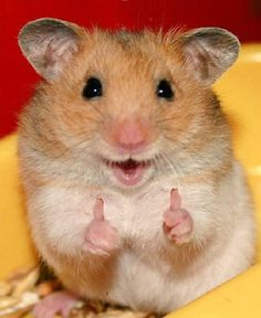 You have been #Blessed by the positivity hampster. May your day be as bright as her smile. -Markiplier XD