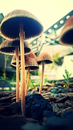Mushrooms by Jarek Kot on tookapic