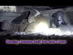Rescuing a homeless family from under a house.  Please share  :-)