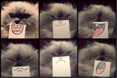 Funny pictures about Emotions On Paper. Oh, and cool pics about Emotions On Paper. Also, Emotions On Paper photos. Crazy Cat Lady, Crazy Cats, I Love Cats, Cute Cats, Funny Kitties, Cat Fun, Silly Cats, Funny Animals, Cute Animals